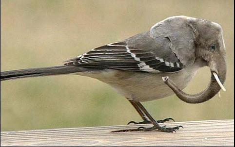 oiseaulphant.jpg