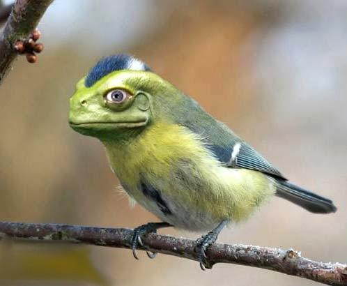 oiseaux lézard