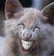 """L'image """"http://devousamoi.unblog.fr/files/2007/01/sourirechat.jpg"""" ne peut être affichée car elle contient des erreurs."""
