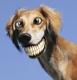 """L'image """"http://devousamoi.unblog.fr/files/2007/01/sourirechien.jpg"""" ne peut être affichée car elle contient des erreurs."""