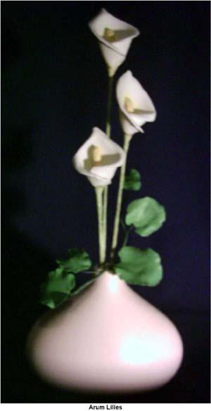 arumlilies.jpg